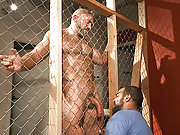 Muscle older gay bears fuck so rough and hard