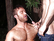 Muscle older gay men suck cocks and eat juicy cum